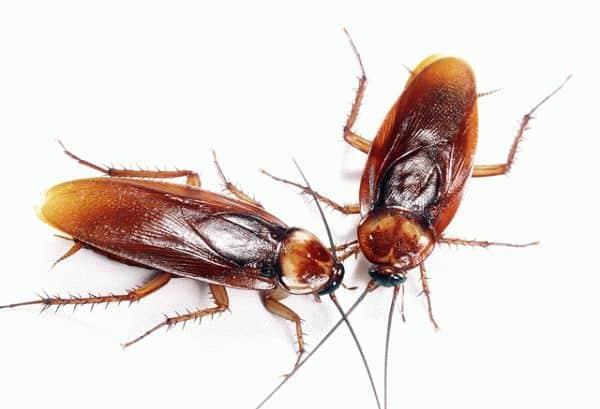 заговор от тараканов в доме
