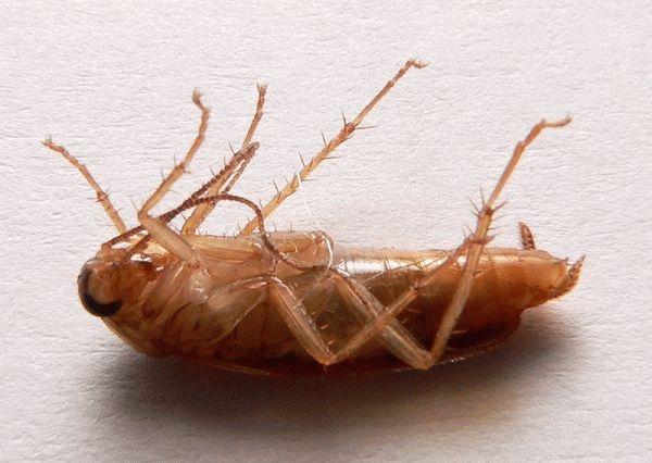 ритуал убийства таракана