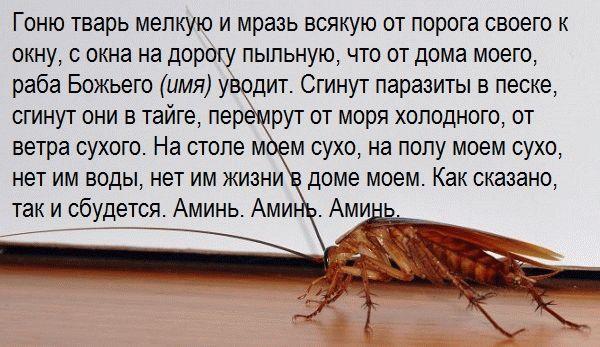 универсальный заговор от насекомых