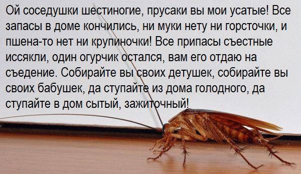 заговор от тараканов на огурец