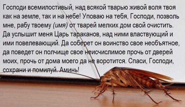 заговор от тараканов травницы Аграфены